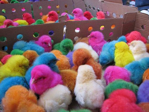 Chickens Jezzbean